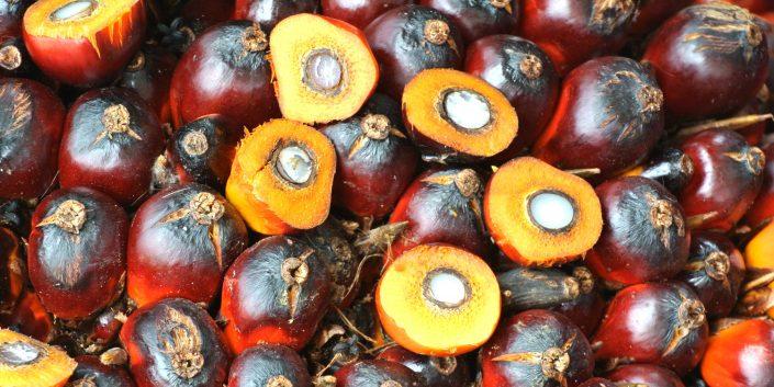 Palmfrüchte als Ausgangsmaterialen für Oleochemikalien